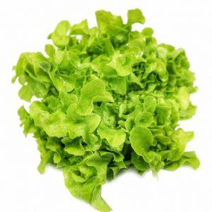 ผักสลัด กรีนโอ๊ค Green Oak Lettuce