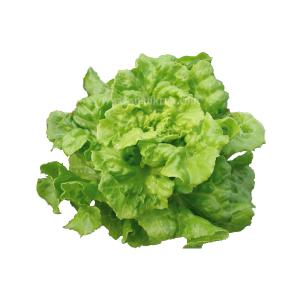 ทอม ทัมป์ (Tom Tumb Lettuce)