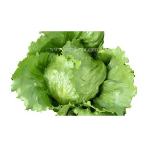 ผักกาดแก้วเขียว (Green Ice Crisphead)
