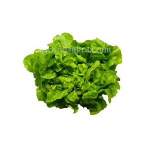 เอมเมอรัล (Emerald Lettuce)